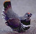 spruce grouse's Avatar